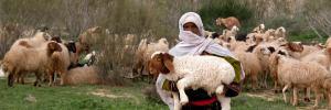 bibleplaces-sheep